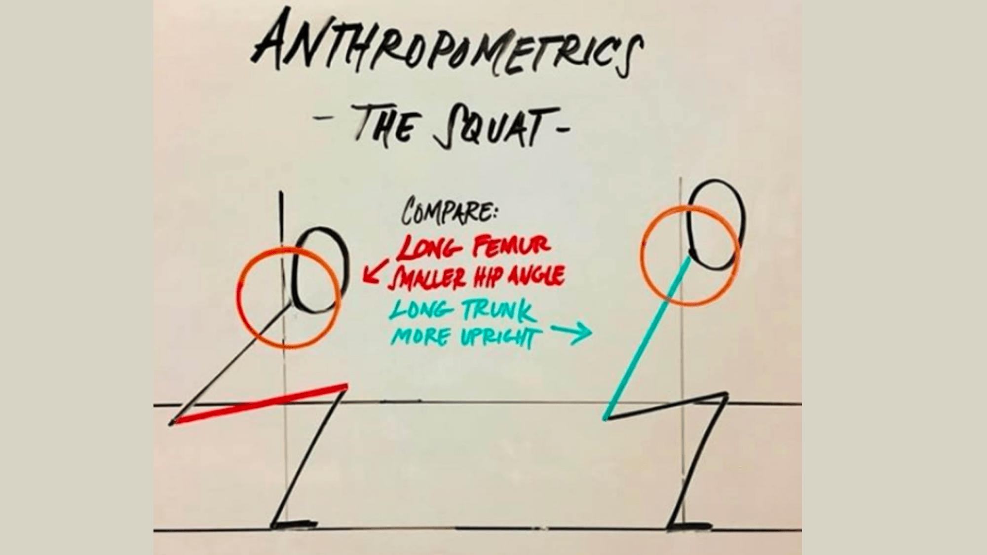 Squat Antrhopometrics