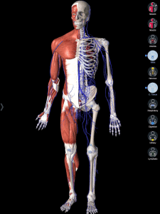 Essential Anatomy fitness app
